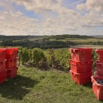 Vendanges 2015 - caisses