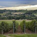 Vignes Champagne Vincent Bennezon